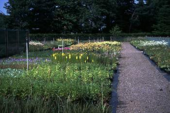 Herbaceous beds at Berrybank